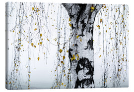 Leinwandbild  Birch Tree 1 - Mareike Böhmer Photography