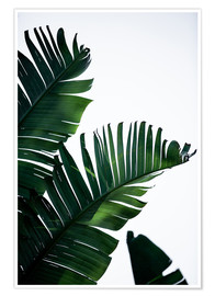 Premium-Poster Palm Leaves 16